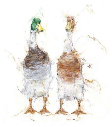 ducks low res